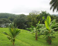 tropical landscaping